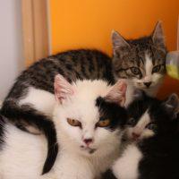 Foto von Wira mit ihren Kitten Walea, Wena, Wesley & Watson