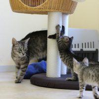Foto von Adele mit ihren Kitten Aliza, Manja, Zola, Oggy & Nuri