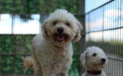 Bonnie & Ricky mit ihrer Lieblingspflegerin :-)