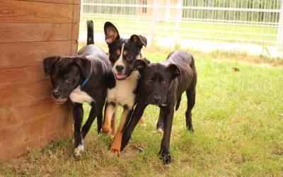 "Unsere 16 Hunde in der Sendung ""maintower"""