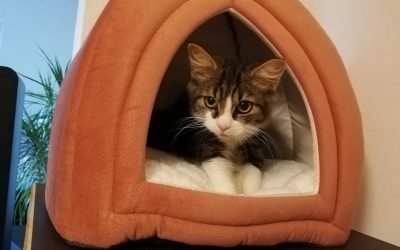 Bericht von Maggy aus ihrem neuen Zuhause :-)