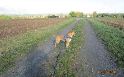 Sumi nimmt uns mit auf ihren täglichen Spaziergang :-)