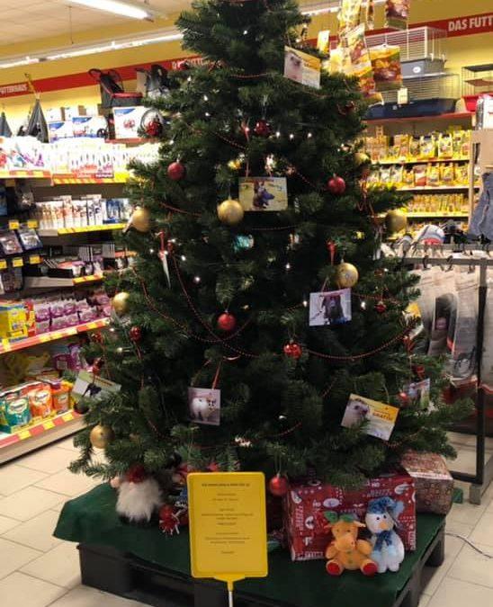 Weihnachtswunschbaum im Futterhaus Kassel