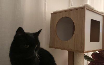 Katzenoma Bette im neuen Zuhause :-)