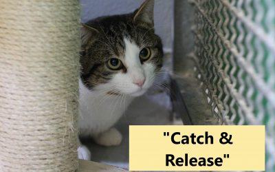 """Projekt """"Catch & Release"""""""