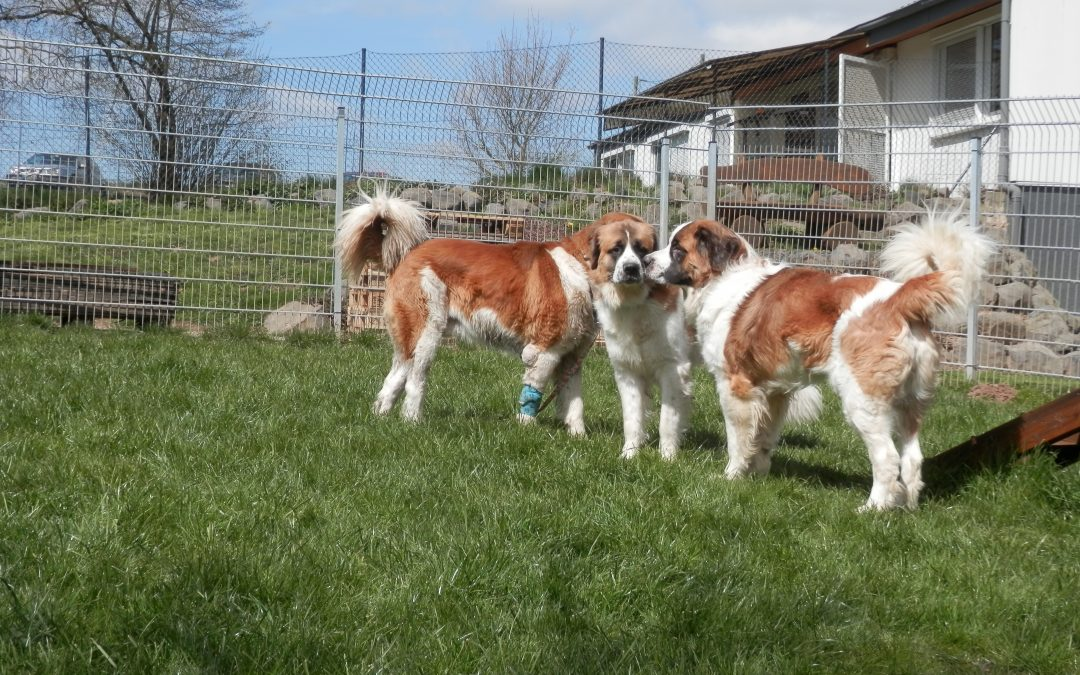 Janosch, Kenai und Coda