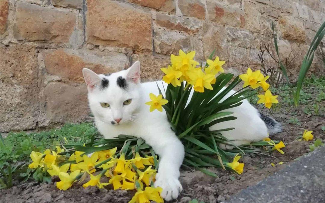 Barclay wünscht frohe Ostern