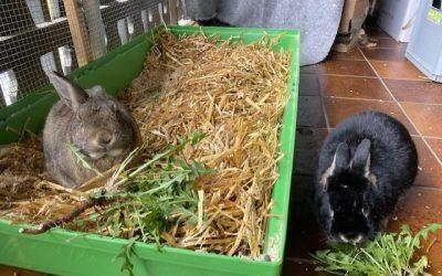Pepper (ehemals Bugs Bunny) sendet Ostergrüße