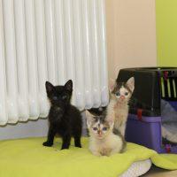 Foto von Baloo, Camillo, Elise, Mogli, Tom **Fundkatzen aus Knüllwald**