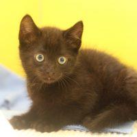 Foto von Lina und Lino ** Fundkatzen aus Felsberg**