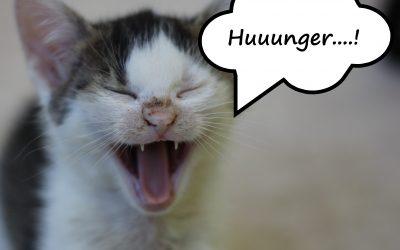 """""""Huuunger….!"""" Uns geht das Kittenfutter aus…"""