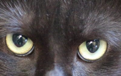 Black cats are beautiful :-)