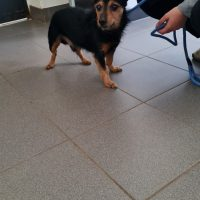 Foto von **Fundhund aus Bad Emstal**