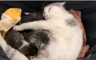 """Happy End für Katzenfamilie in der Sendung """"maintower"""""""