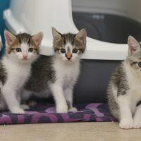 Foto von Danara, Daliah, Divina & Dalino **Fundkatzen aus Gudensberg**