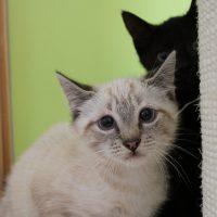 Foto von Flauschi, Flummi, Feline, Fridoline, Fiona **Fundkatzen aus Spangenberg**