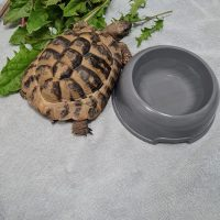 Foto von Landschildkröte **Fundschildkröte aus Fritzlar-Werkel**