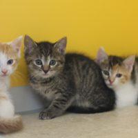 Foto von Maarja, Marbon, Madalo, Maarten, Mabelle **Fundkatzen aus Gudensberg**
