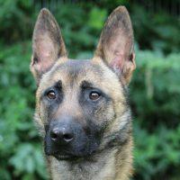 Foto von Hero **Fundhund aus Felsberg**