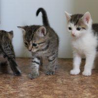 Foto von Miriam, Maja, Mia, Mike **Fundkatzen aus Knüllwald**