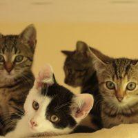 Foto von Namero, Nina, Nani und Narnia **Fundkatzen aus Felsberg**