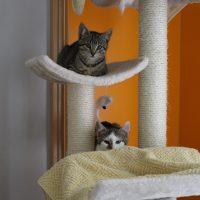 Foto von Yahoo, Bing und Firefox **Fundkatzen aus Gudensberg**